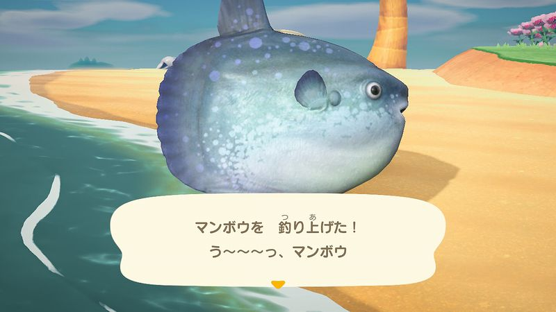 どうぶつの森 7月の魚